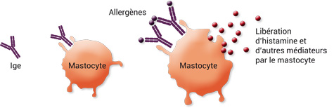 mastocyte.jpg